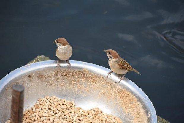 """""""Bir taşta iki kuş"""" yerine """"Bir kapta iki kuş"""""""